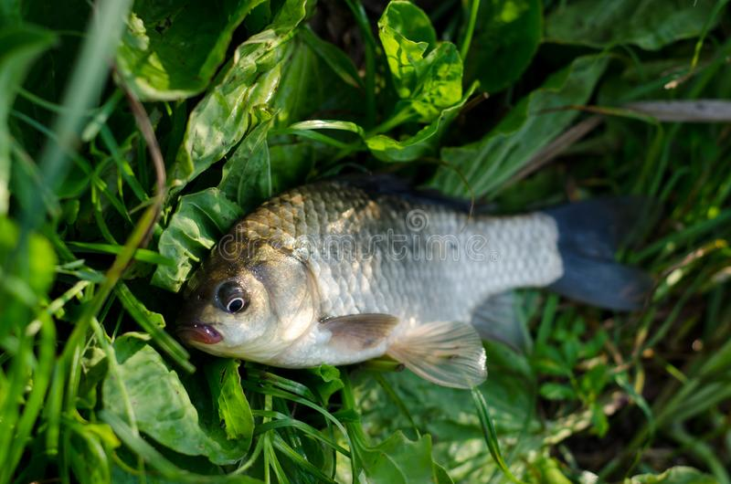 Peixes travados frescos fotos de stock