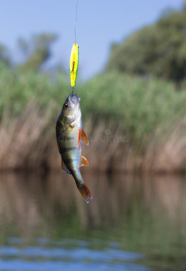 Peixes travados no giro imagens de stock