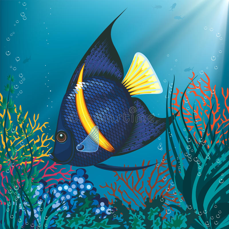 Peixes tropicais ilustração royalty free