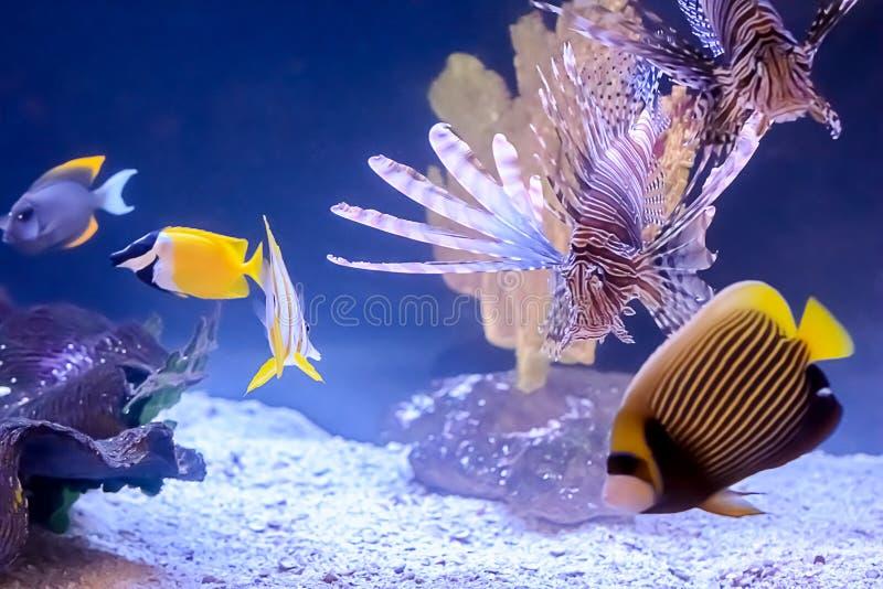 Peixes tropicais foto de stock royalty free