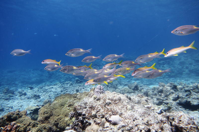 Peixes tropicais fotos de stock