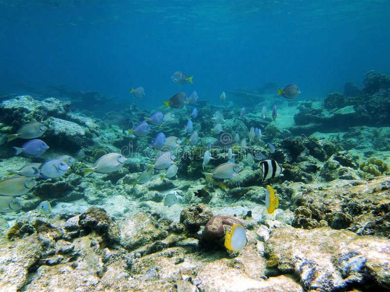 Peixes tropicais coloridos fotografia de stock