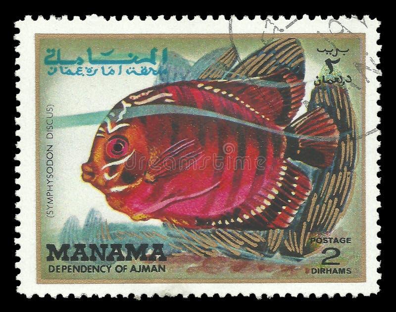 Peixes tropicais, disco de Symphysodon imagens de stock