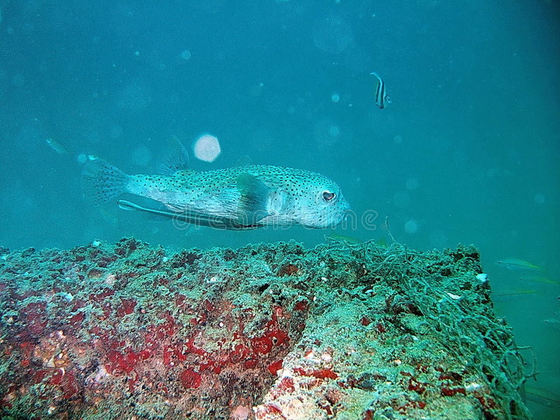 Peixes tropicais e recife coral imagem de stock