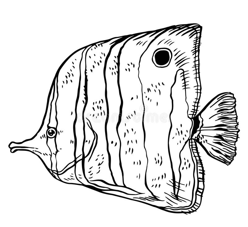 Peixes tropicais - ilustração do desenho da mão do vetor ilustração royalty free