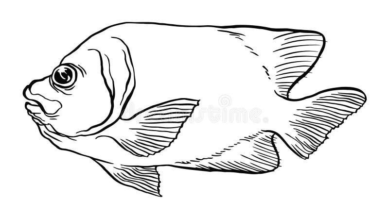 Peixes tropicais - ilustração do desenho da mão do vetor ilustração do vetor