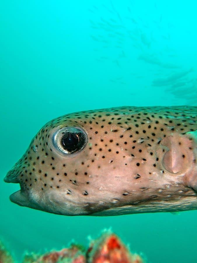 Peixes tropicais incomuns imagens de stock royalty free