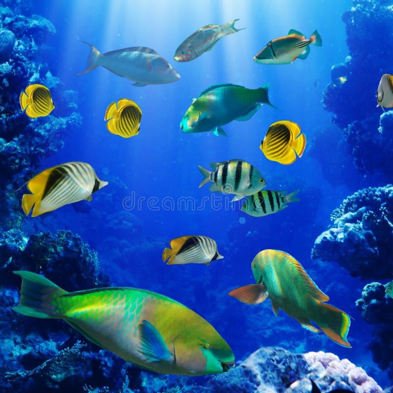 Peixes tropicais no recife coral