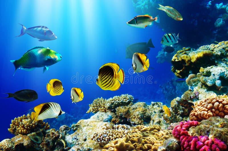 Peixes tropicais sobre o recife coral foto de stock