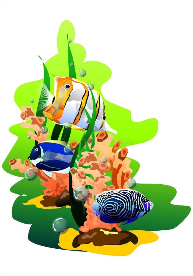 Peixes tropicais (Vetor) ilustração royalty free