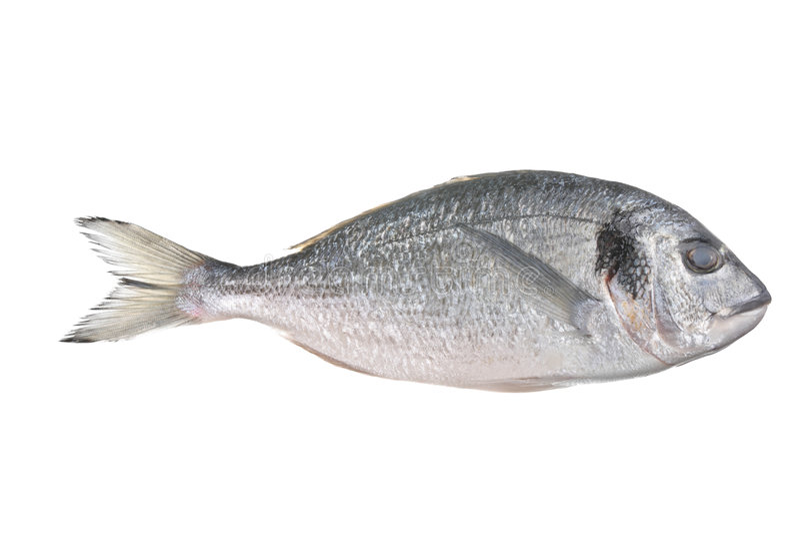 Peixes Uncooked (auratus do sparus) imagens de stock royalty free
