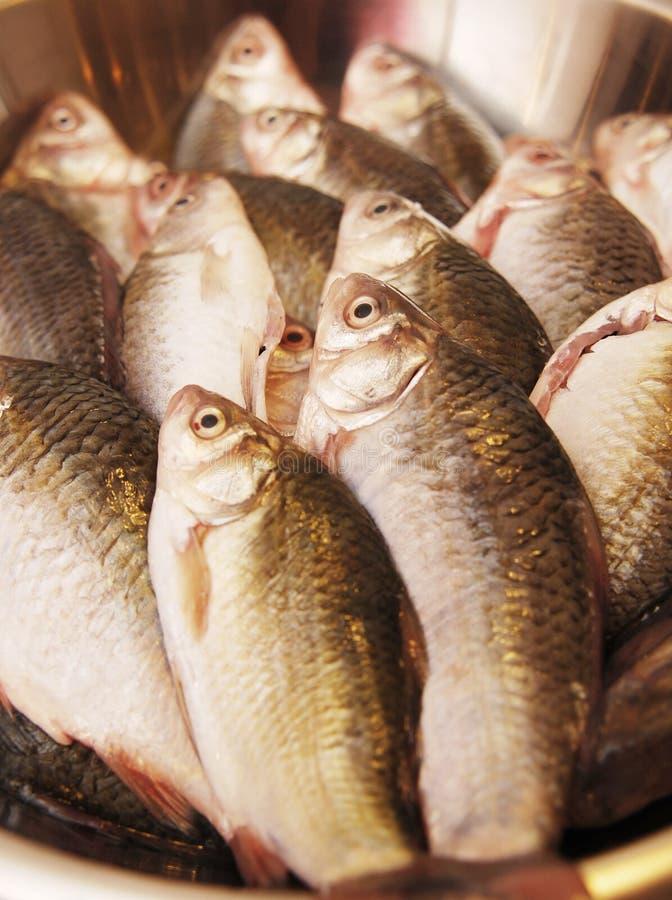 Peixes uncooked frescos   fotografia de stock