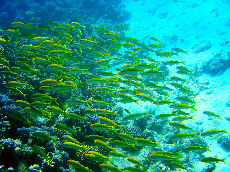 Peixes verdes foto de stock royalty free