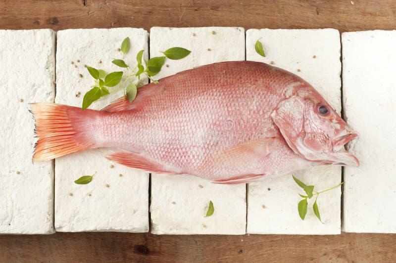 Peixes vermelhos da garoupa fotografia de stock