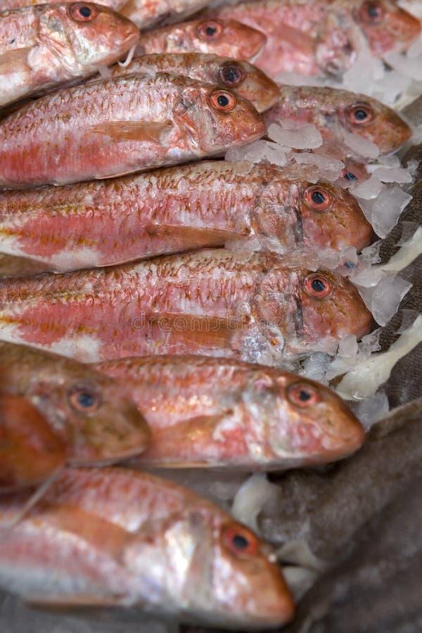 Peixes vermelhos. Mercado de peixes. Salmonete vermelho do cartucho fotografia de stock