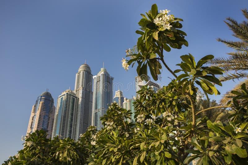 pejzaż miejski Dubai marina panoramiczny sceny zmierzch UAE zdjęcie stock