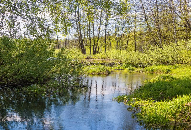 Pekhorka river in the reserve `Moose island`. Moscow region. Russian Federation. Spring 2018 royalty free stock image