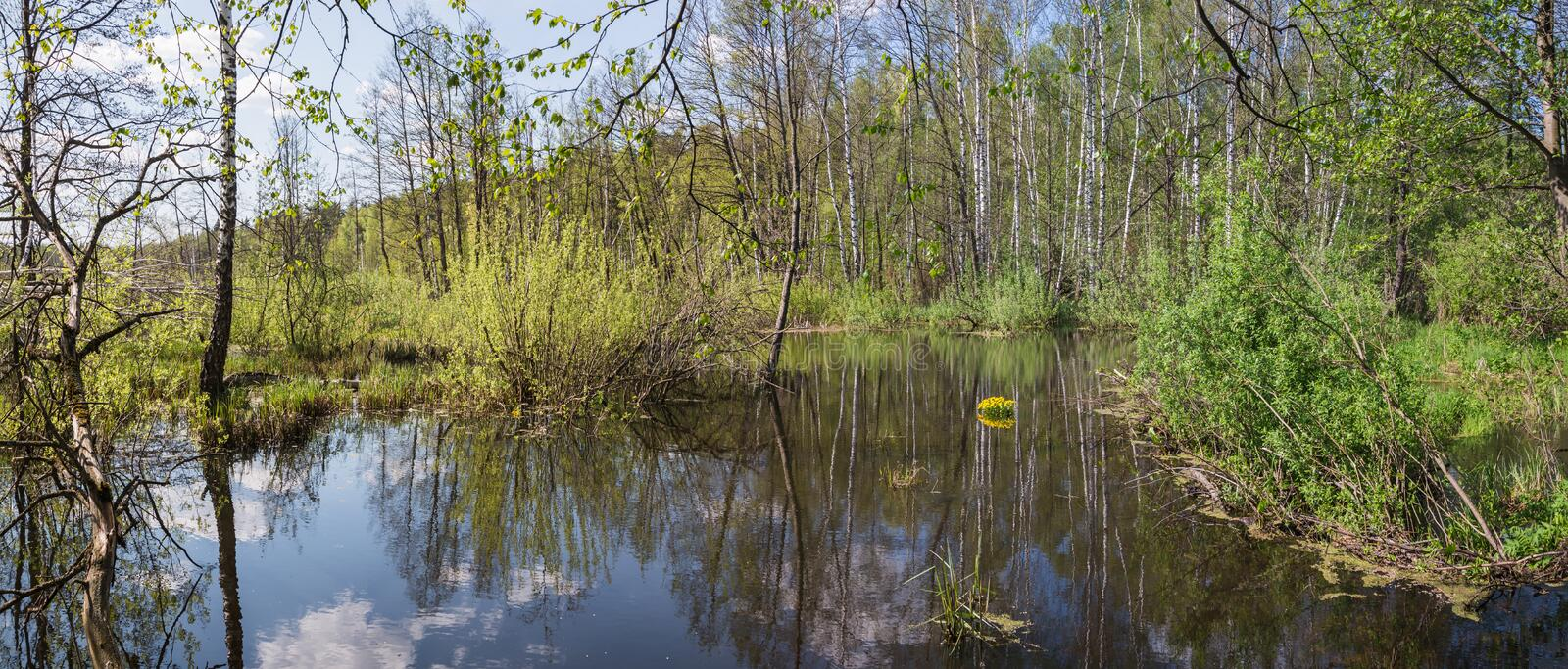 Pekhorka river in the reserve `Moose island`. Moscow region. Russian Federation. Spring 2018 stock photos