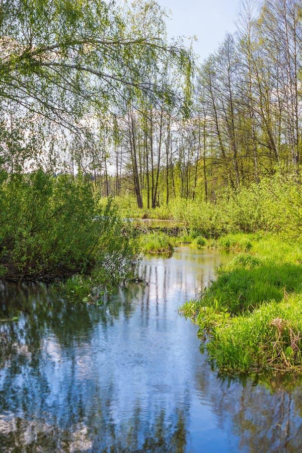 Pekhorkarivier in het eiland ` van reserve` Amerikaanse elanden Het gebied van Moskou Russische Federatie royalty-vrije stock foto