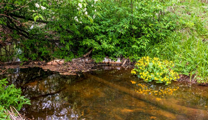Pekhorkarivier in het eiland ` van reserve` Amerikaanse elanden Het gebied van Moskou Russische Federatie royalty-vrije stock afbeeldingen