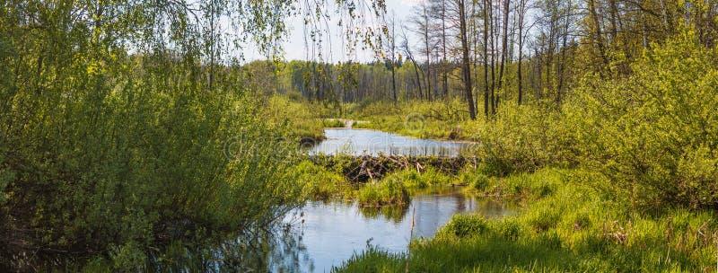 Pekhorkarivier in het eiland ` van reserve` Amerikaanse elanden Het gebied van Moskou Russische Federatie stock afbeelding