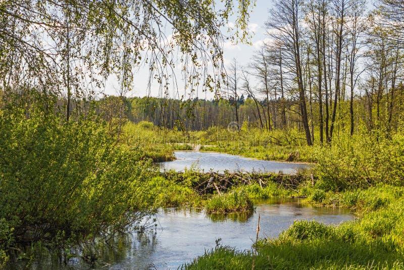 Pekhorkarivier in het eiland ` van reserve` Amerikaanse elanden Het gebied van Moskou Russische Federatie royalty-vrije stock fotografie