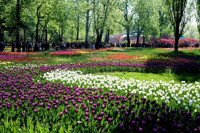 Pekin ogród botaniczny zdjęcie royalty free