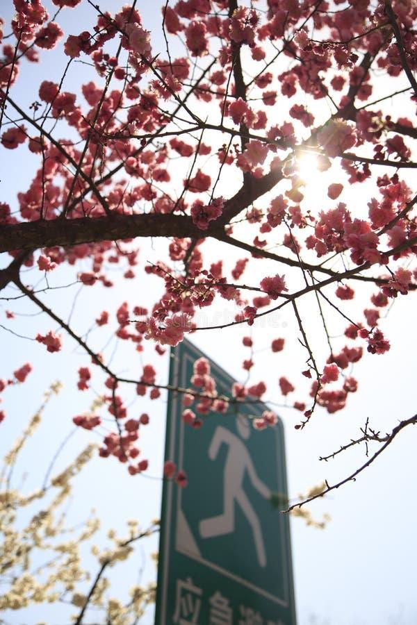 Peking Huangchenggen ruiniert Park lizenzfreie stockfotos