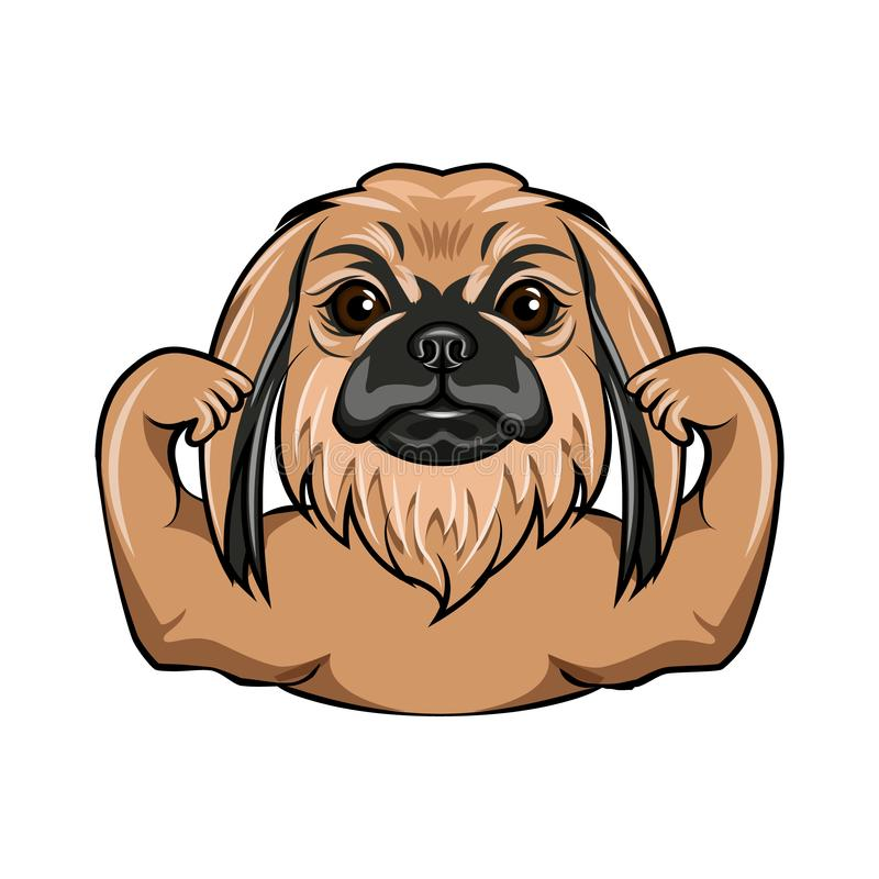 pekingese的狗 肌肉 肌肉狗 减速火箭的纵向 向量 向量例证