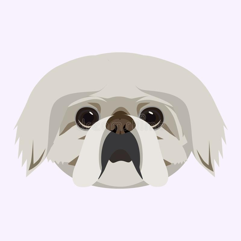 Pekingese dog vector illustrated portrait . Cute face on a gray background. royalty free illustration