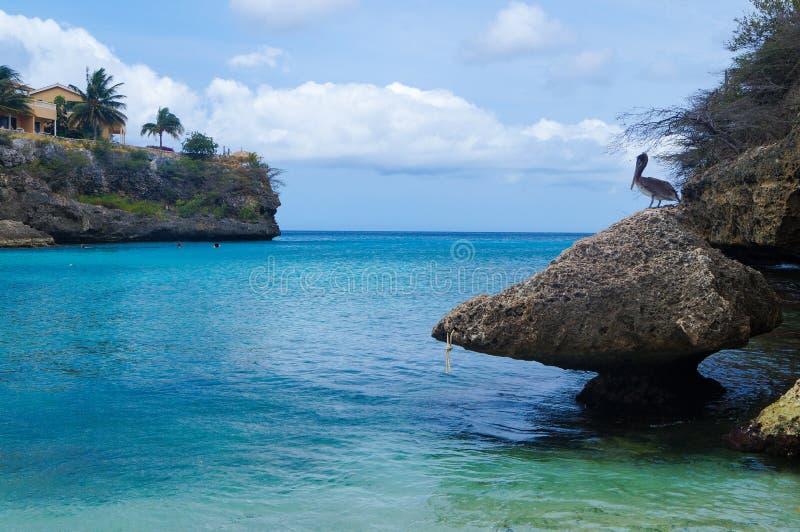 Pelícano que se sienta en una roca imagen de archivo