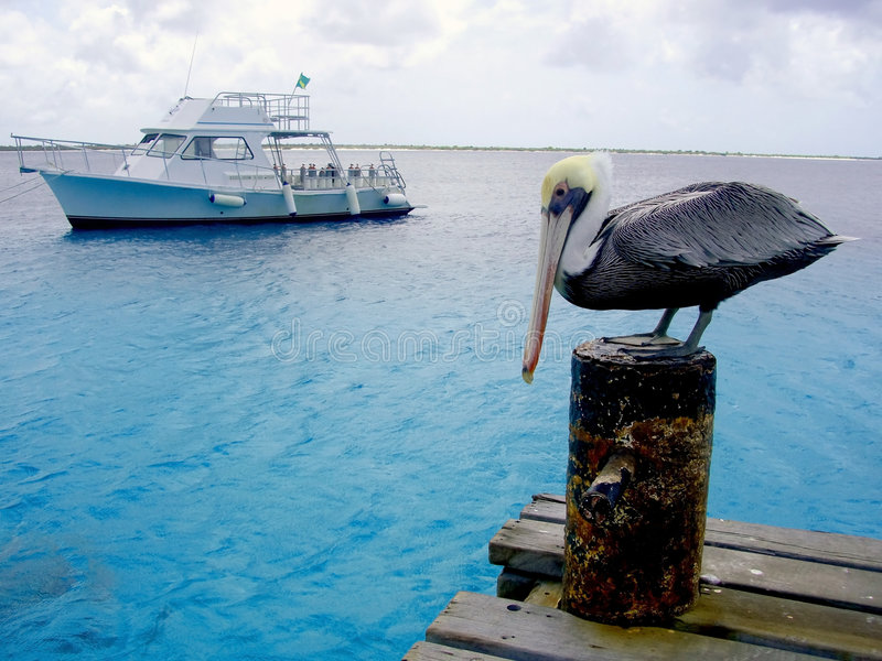 Pelícano y barco tropicales de la zambullida imagenes de archivo