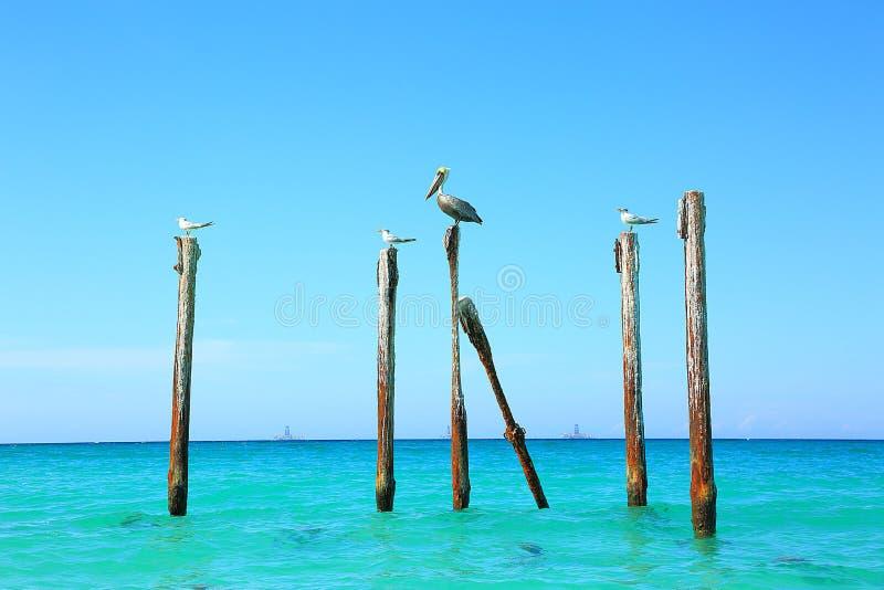 Pelícano y gaviotas que se sientan en registros Agua de la turquesa y fondo del cielo azul foto de archivo libre de regalías