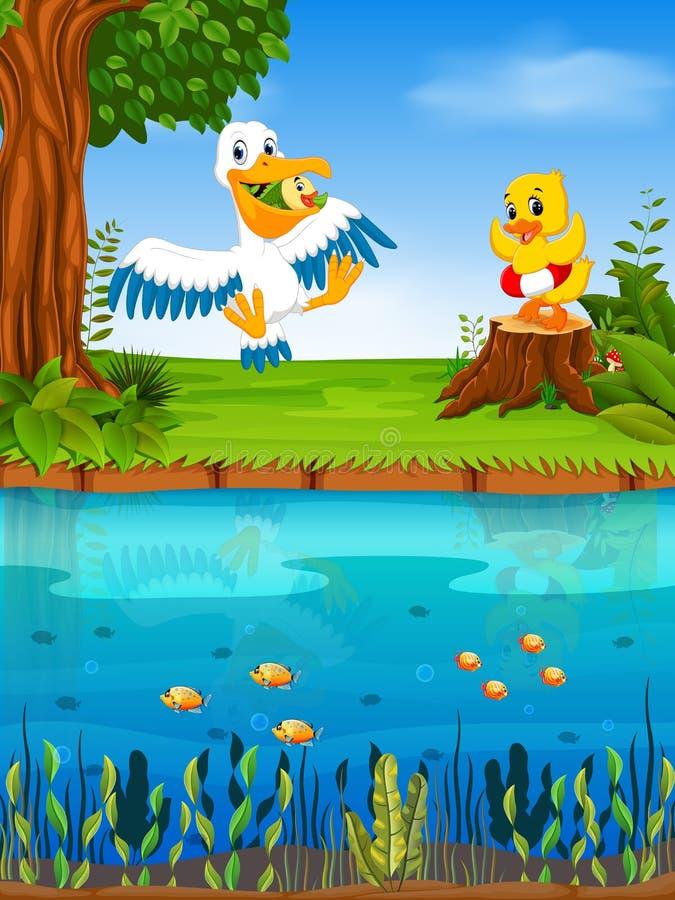 Pelícano y pato lindos en el río stock de ilustración