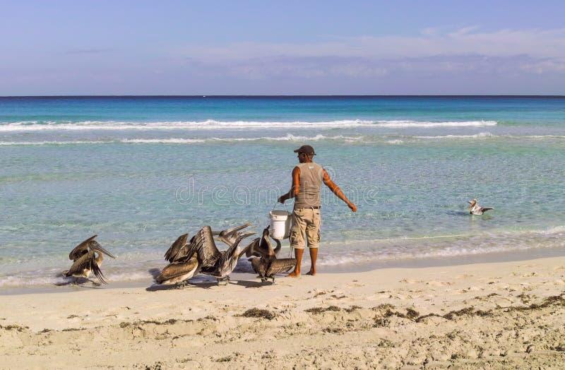 Pelícanos de alimentación del pescador imagen de archivo