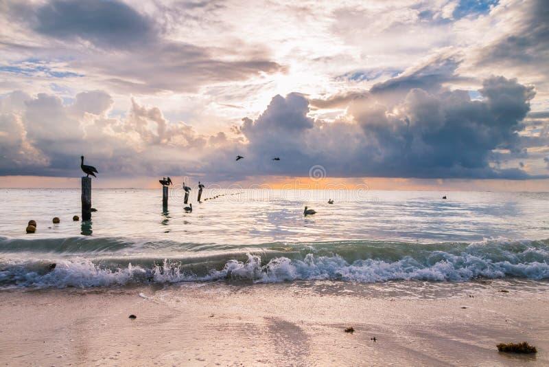 Pelícanos que descansan sobre los pilares de madera del amarre sobre un Caribe tranquilo S foto de archivo