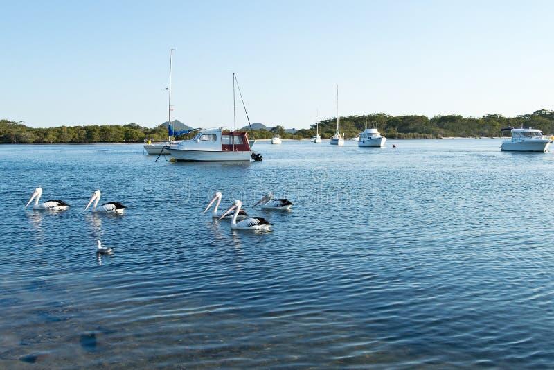 Pelícanos y barcos en el lago Myall foto de archivo