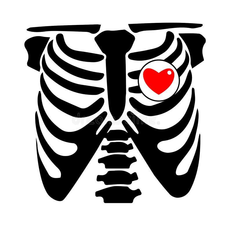 Película de radiografía esquelética del rayo del ejemplo del hueso del corazón del vector de la costilla del pecho ilustración del vector