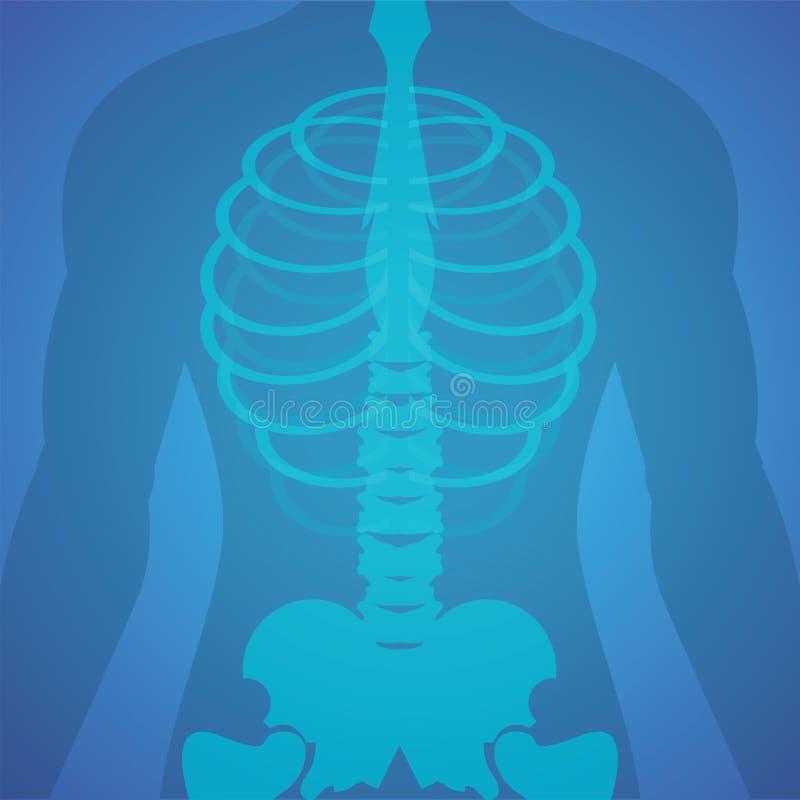 Película de radiografía humana stock de ilustración