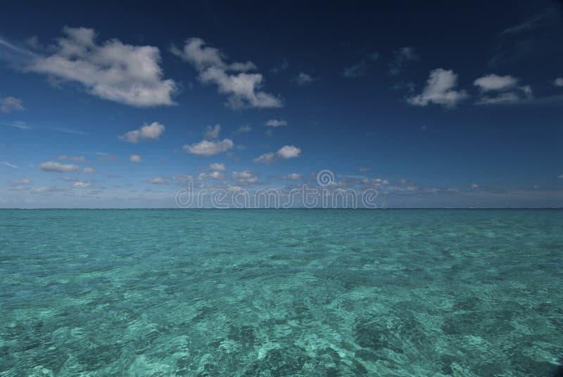 Download Pelagic stock photo. Image of still, pelagic, bassas - 22232694