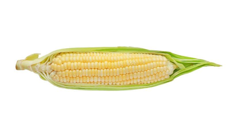 Pelando el alimento biológico del maíz de la naturaleza aislado en el fondo blanco imagenes de archivo