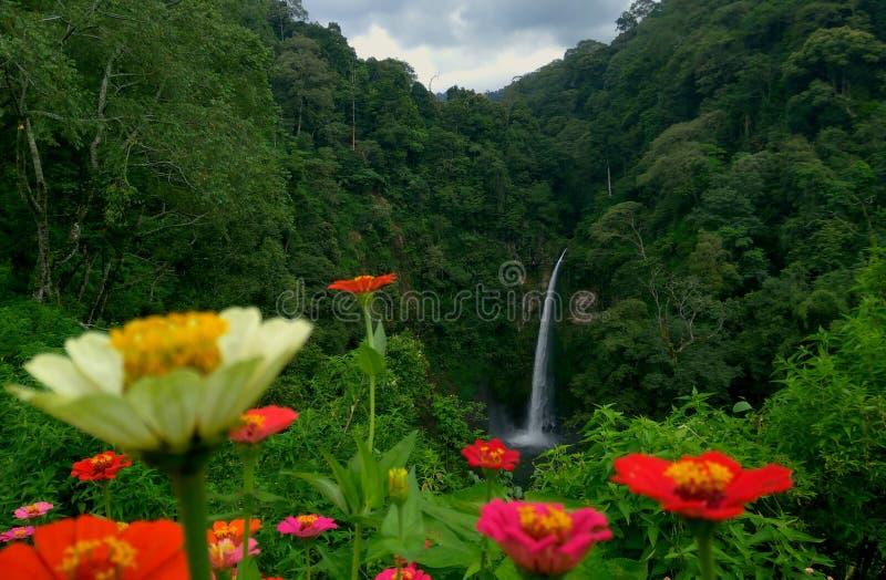 Pelangi de Coban da beleza da cachoeira imagem de stock royalty free