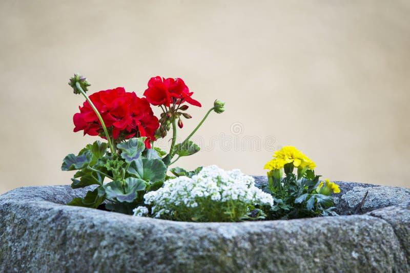 Pelargon och ringblomman blommar inlagt i en stenkostnad arkivbild