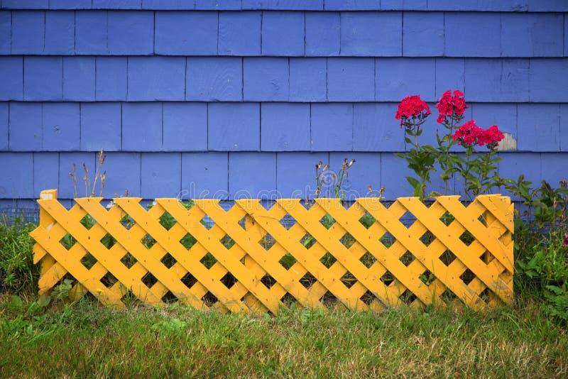 Pelargonie gegen eine purpurrote Wand lizenzfreies stockbild