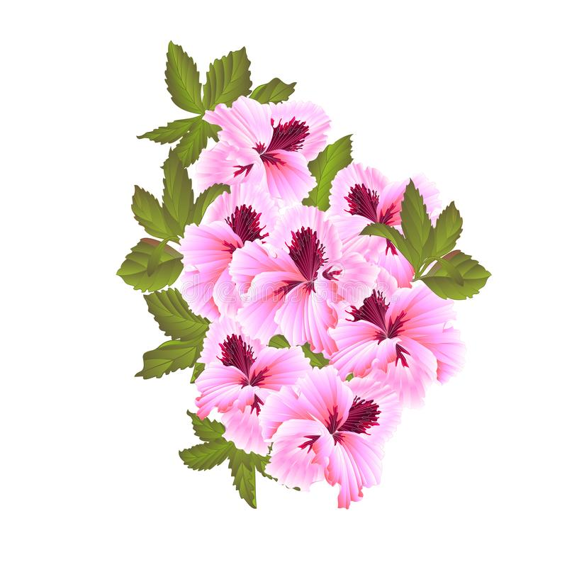 Pelargonium Geranium summer pink flowers and leaves  on white background elements for design watercolor vintage vector stock illustration
