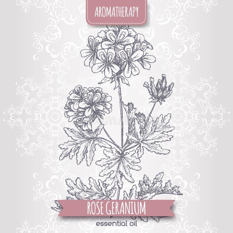 Free Pelargonium Graveolens Aka Rose Geranium Sketch On Elegant Lace Background. Stock Images - 72352974