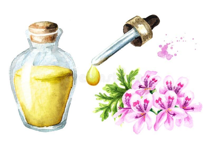 Pelargonium graveolens or Pelargonium x asperum, geranium flower and essential oil set. Watercolor hand drawn illustration,. Isolated on white background vector illustration