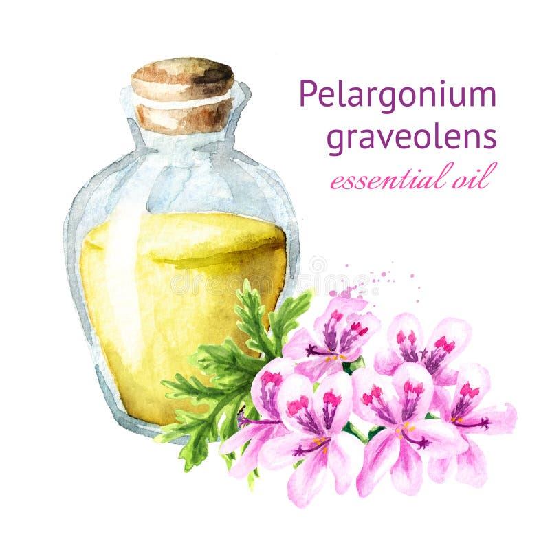 Pelargonium graveolens or Pelargonium x asperum, geranium flower and essential oil. Watercolor hand drawn illustration, isolated. On white background royalty free illustration