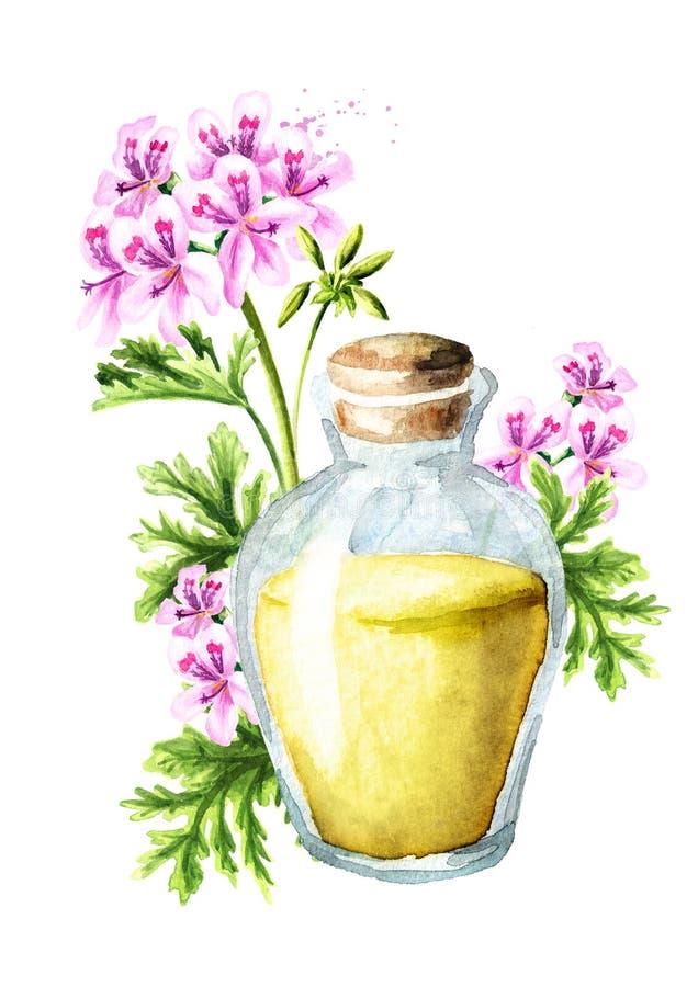 Pelargonium graveolens or Pelargonium x asperum, geranium flower and essential oil. Watercolor hand drawn illustration isolated on. White background stock illustration
