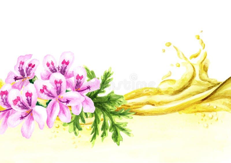 Pelargonium graveolens or Pelargonium x asperum, geranium flower and essential wave. Watercolor hand drawn illustration, isolated. On white background stock illustration